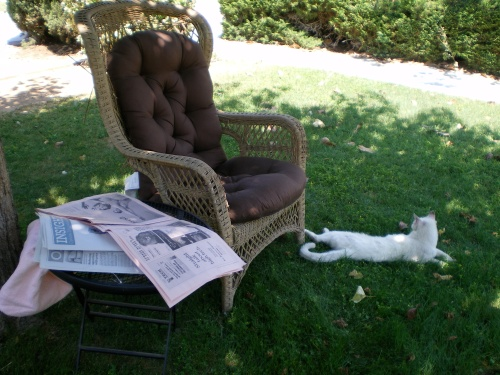 A place to read the Sunday paper