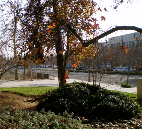 One of the first photos i took for 2012, in downtown Fresno.