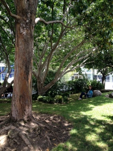 A lovely spot for lunch in Yerba Buena Gardens