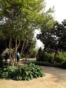 Clovis botanical 2